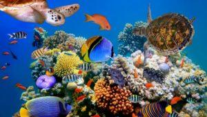 Su Altı Canlıları Ve Görselleri